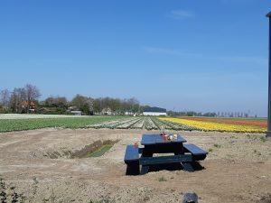 VaVi Tulips schaften